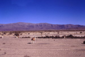 RUE Alpaca3