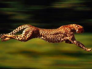 Animal Behavior Adaptations