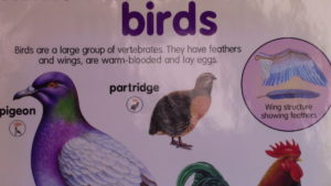 Birds and Interrogatives